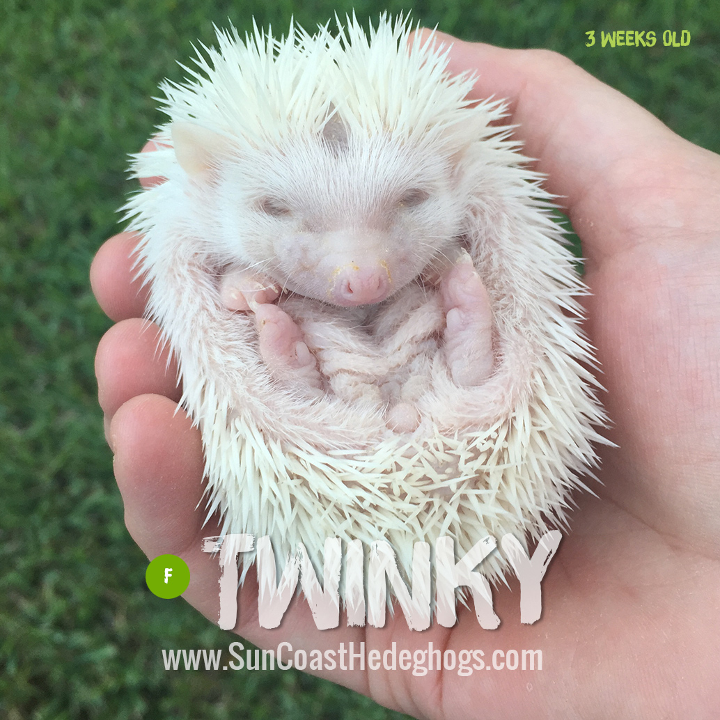 More pictures of Twinky