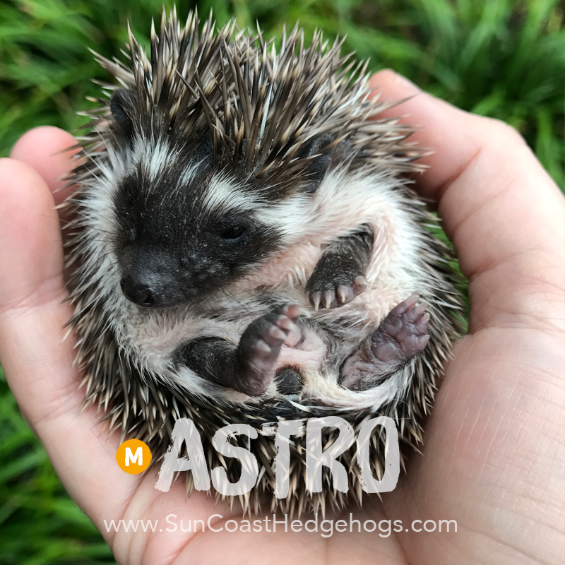 More pictures of Astro