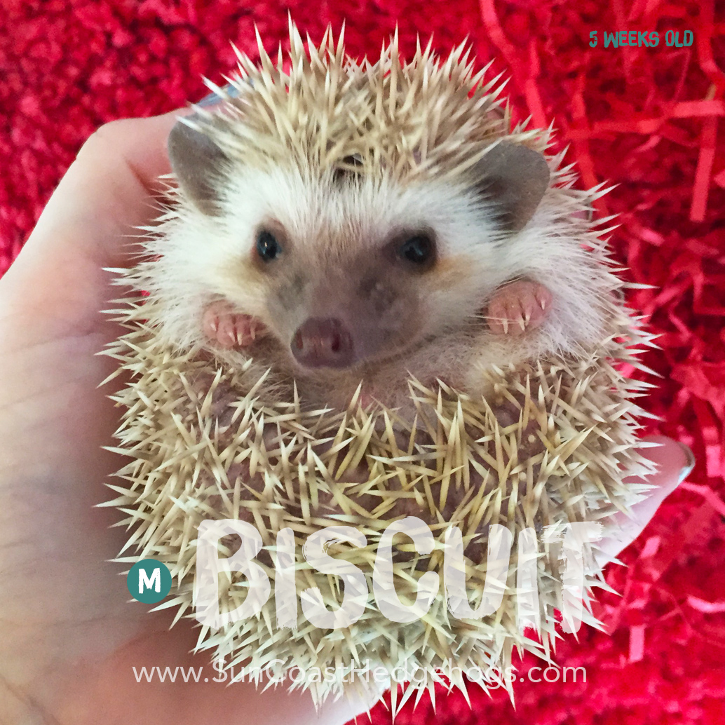 More pictures of Biscuit