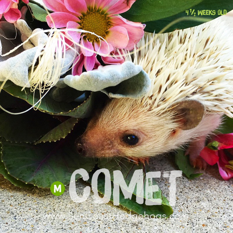 More pictures of Comet