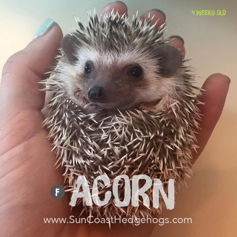 More pictures of Acorn