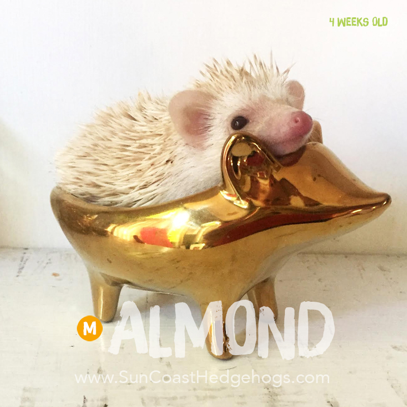 More pictures of Almond