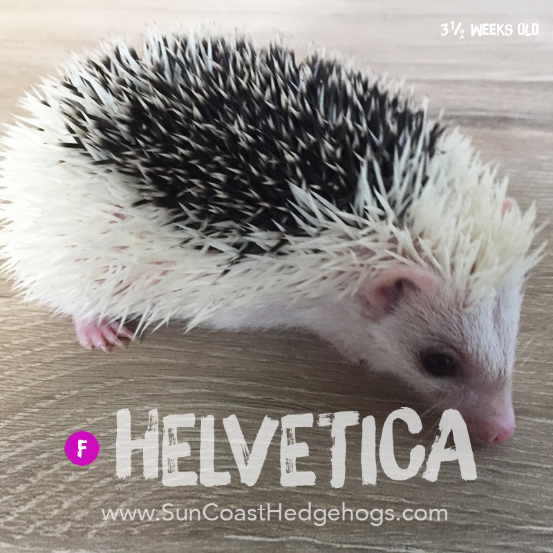More pictures of Helvetica