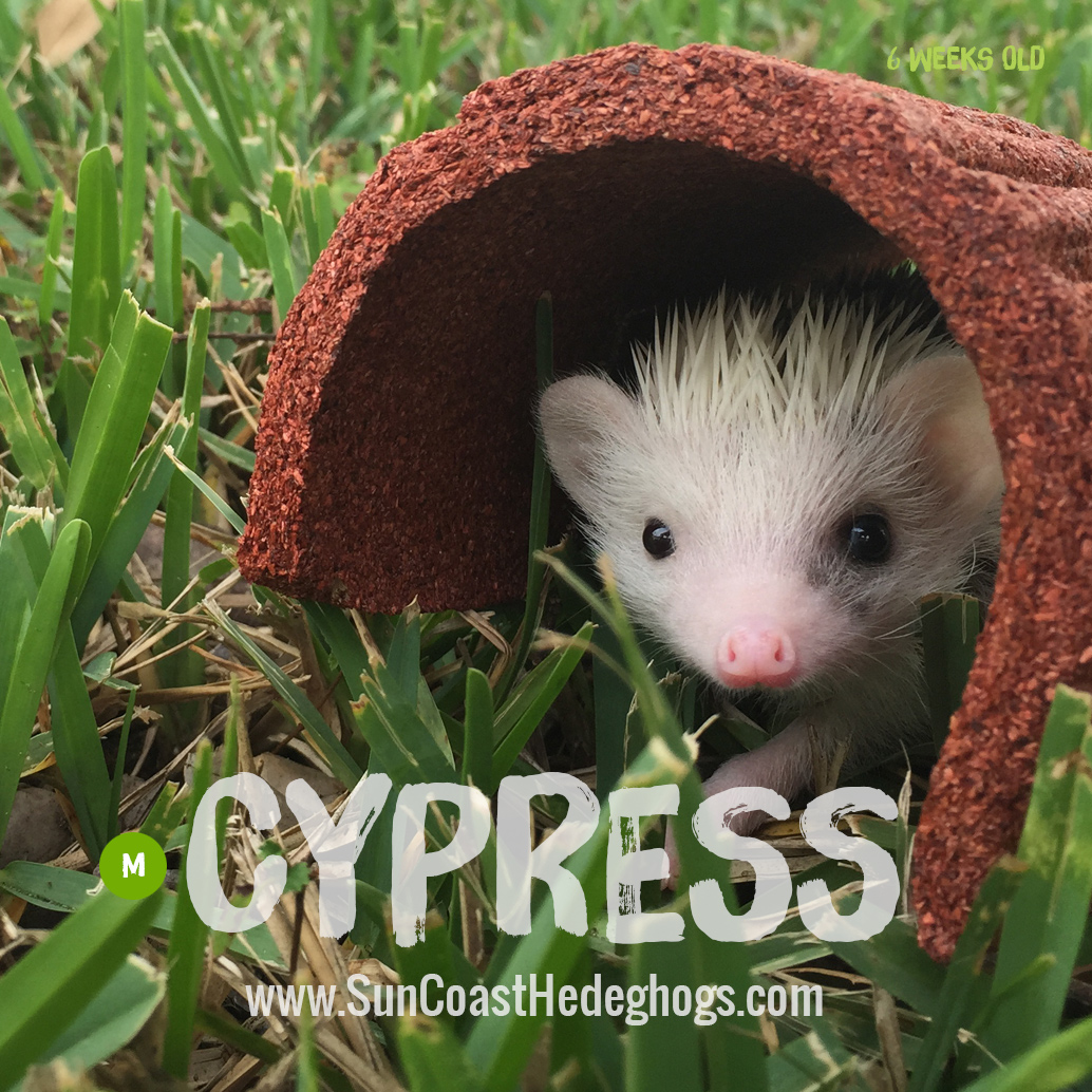 More pictures of Cypress